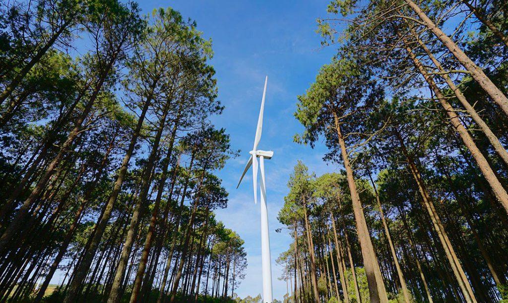 ¿Por qué el viento es un gran aliado para generar electricidad?
